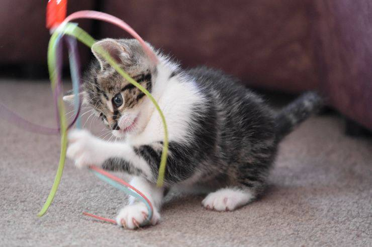 Giochi per divertire il gatto