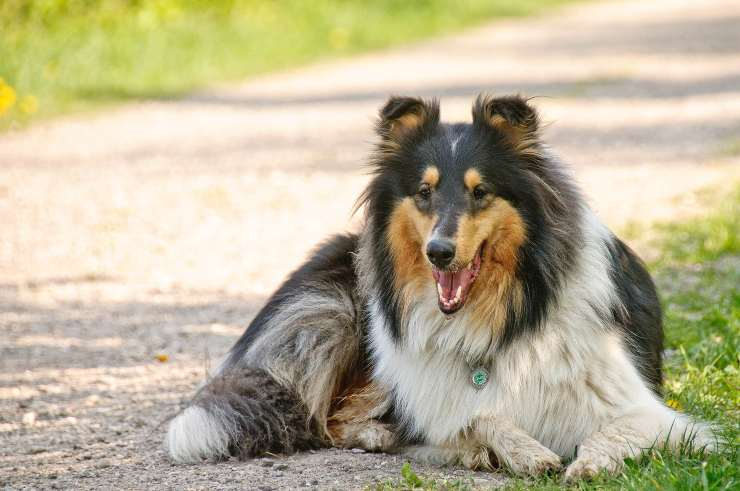 Sindrome dell'intestino irritabile nel cane