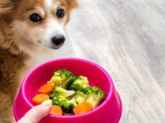 come cucinare le verdure per il cane