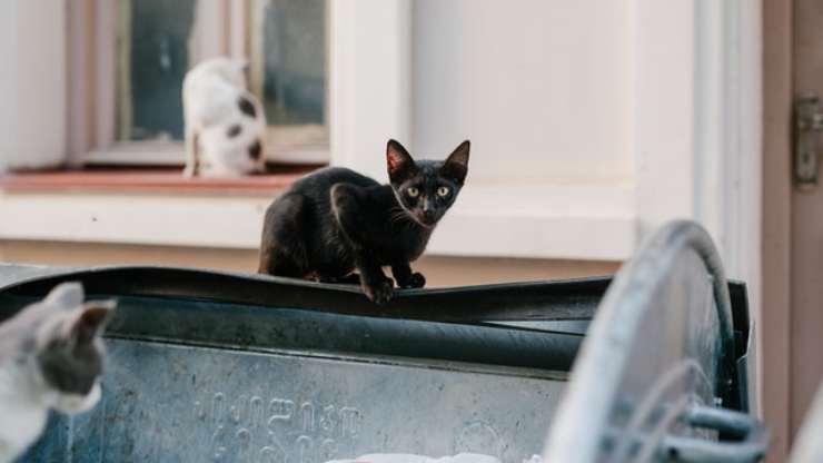 come impedire ai gatti di strappare i sacchetti della spazzatura