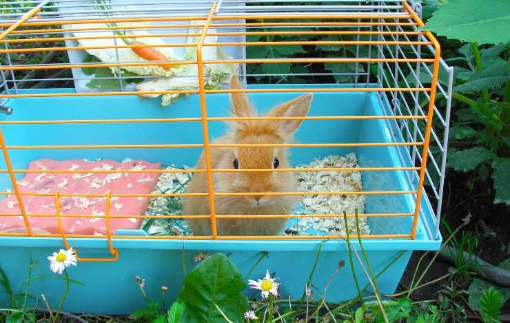 coniglio in gabbia