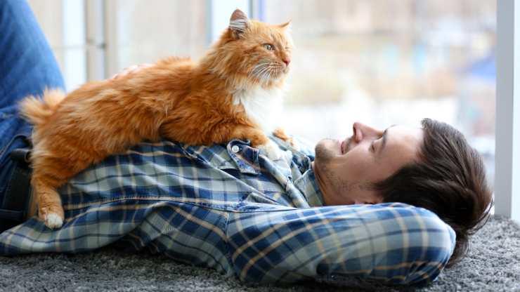 cosa fare con il gatto ogni giorno