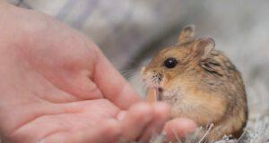 criceto può mangiare semi sesamo