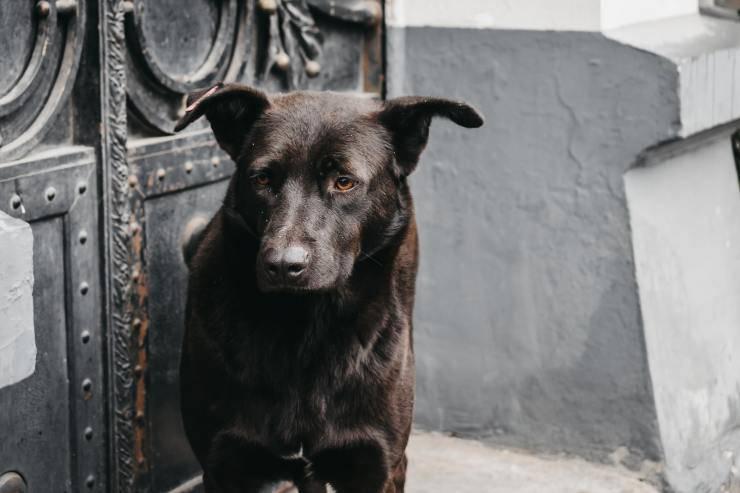 segnalano cane cimitero martina franca