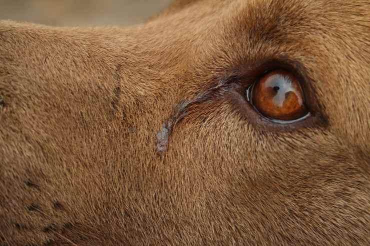 cane intrappolato cisterna sotto pioggia