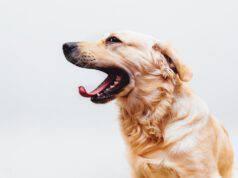 Lo sbadigliare del cane
