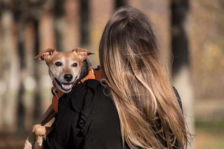 La violence domestique et la maltraitance animale une solution pour aider tout le monde (Photo Pixabay)