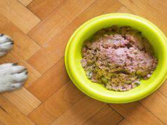 I cani e la dieta YUM