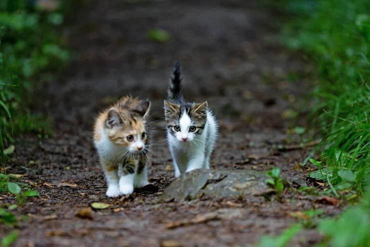 Felini che vengono spesso rapiti