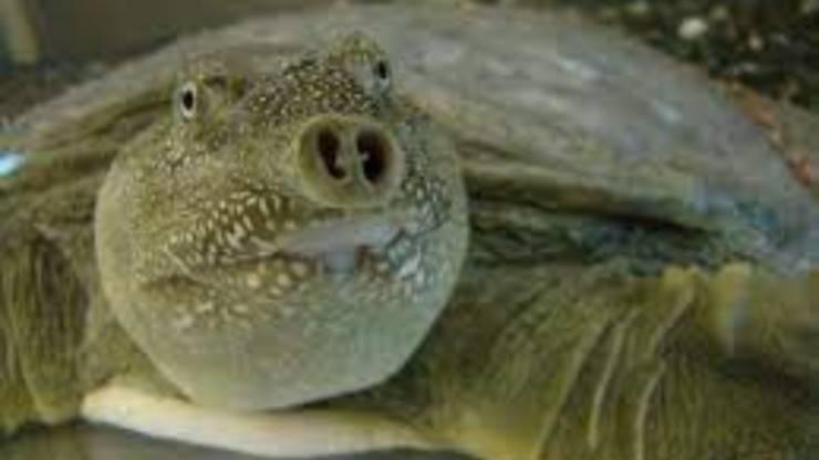Tartaruga aliena: caratteristiche