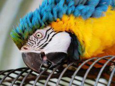 Insegnare al pappagallo a non beccare