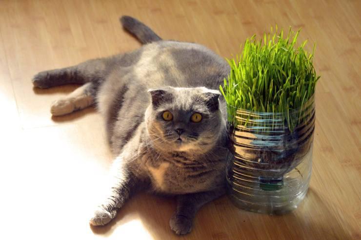 Gatto con pianta