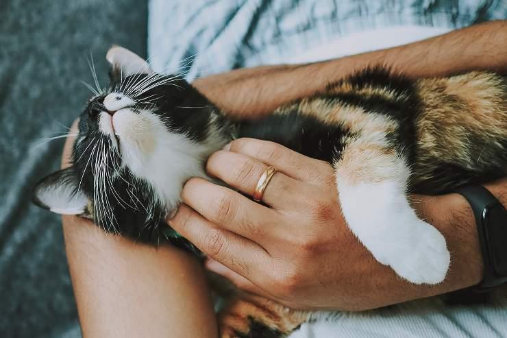 Il comportamento del gatto