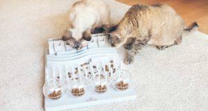 gatti preferiscono cibo gratis