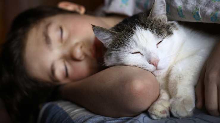 gatti scelgono con chi dormire