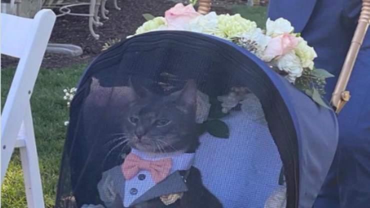 Il gatto al matrimonio (Foto Twitter)