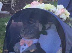 Il gatto nel passeggino (Foto Twitter)