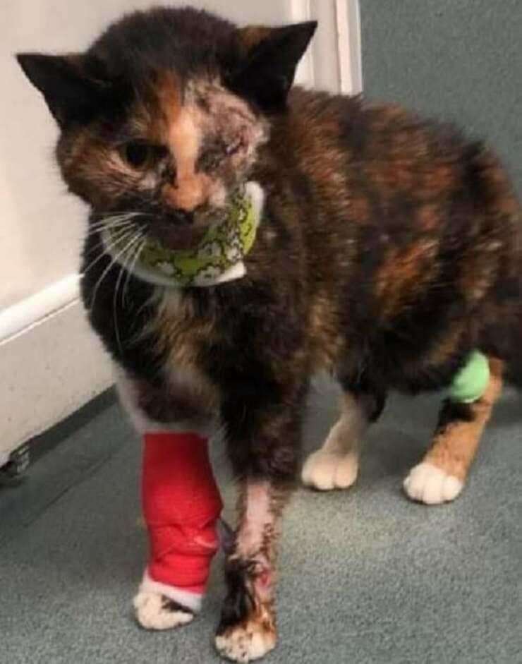 Il gatto salvo per miracolo dopo essere stato investito da un autobus (Foto Facebook)