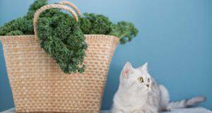 gatto può mangiare cavolo riccio