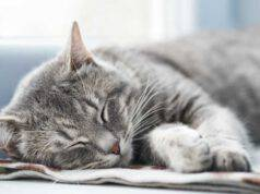 gatto sbava quando dorme