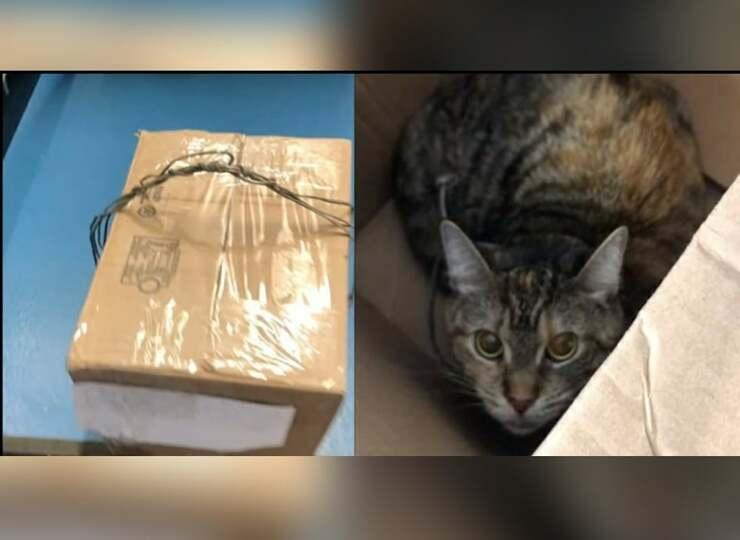Il gatto trovato nello scatolone legato con il filo del telefono al collo ( Screen Video )