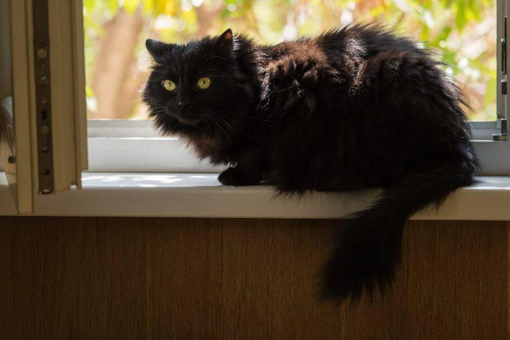 gatto tiffany