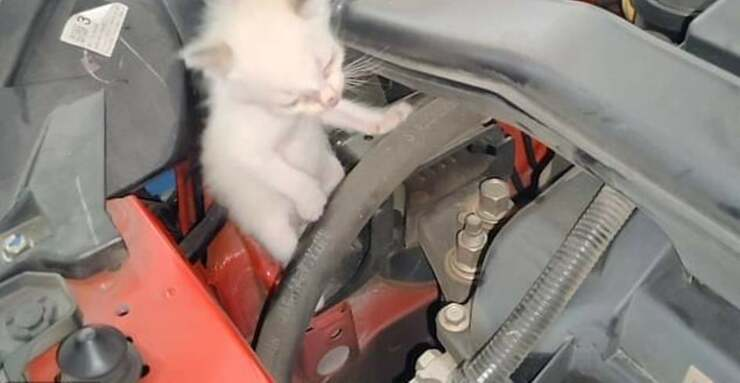 Gatto motore (Screen Video )
