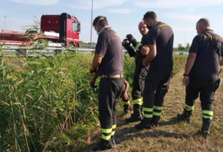 i vigili del fuoco salvano il micio