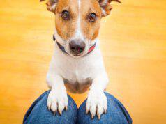 insegnare al cane ad aspettare