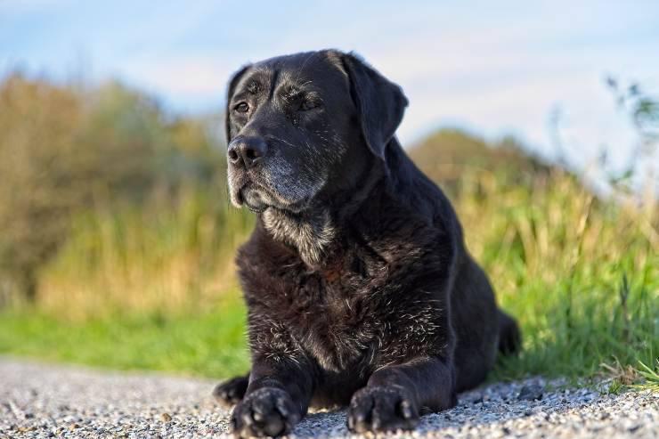 Vitamine per il cane anziano