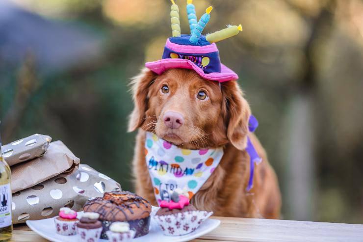 Il cane può mangiare la cheesecake