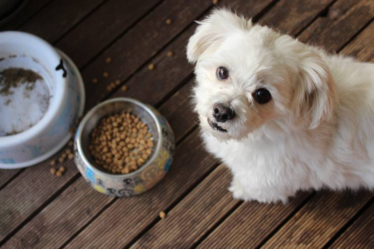 Razze canine sempre affamate