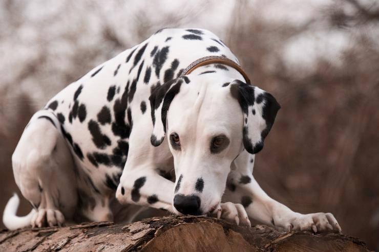 Esemplari canini adatti al trekking