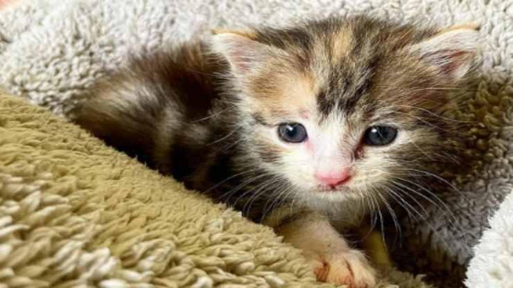 La gattina in primo piano (Foto Instagram)