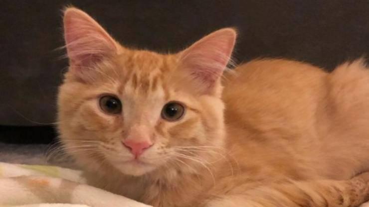 Il gattino Frito in primo piano (Foto Instagram)