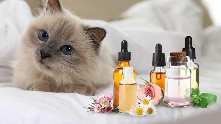 oli essenziali che il gatto non sopporta