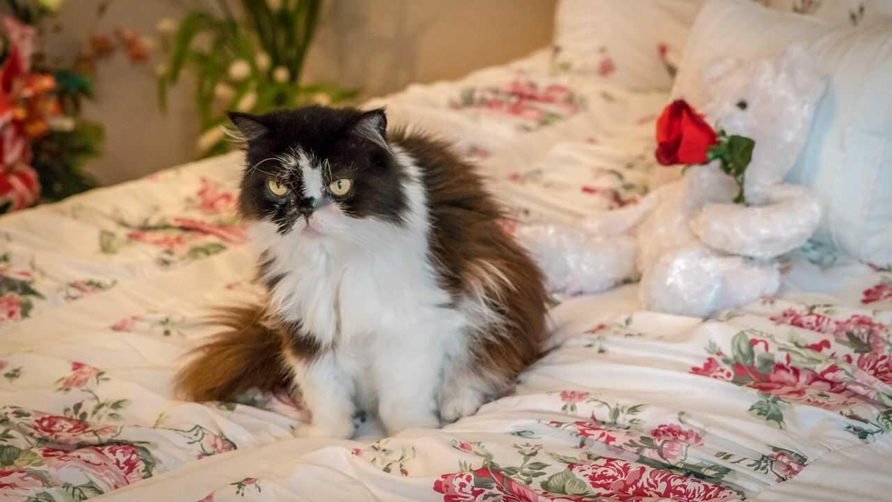 osteoartrite gatto