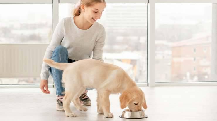 perché non bisogna disturbare il cane quando mangia