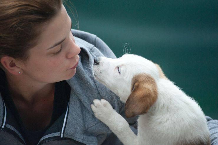 Perché il cane mi lecca le orecchie