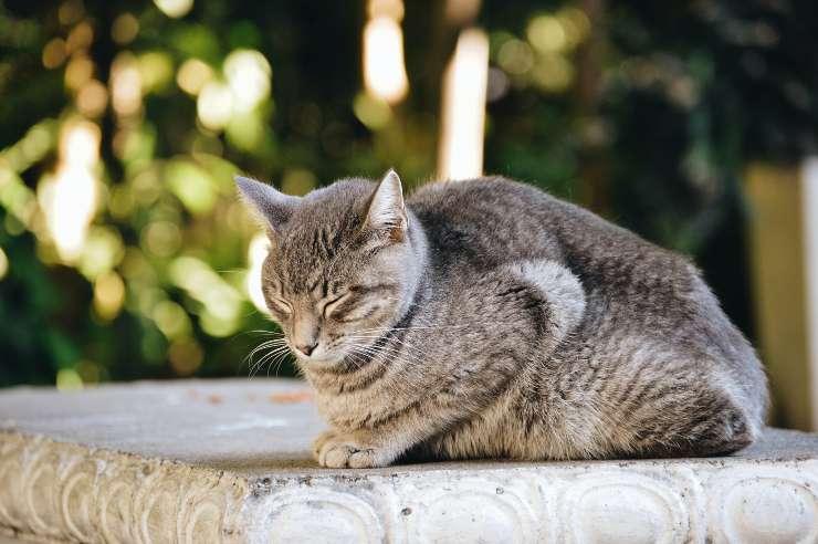 Razze di gatti da giardino