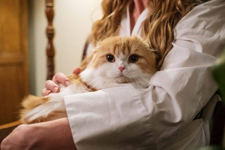 Il felino desidera stare in braccio