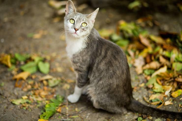 Gatti che vengono spesso rapiti