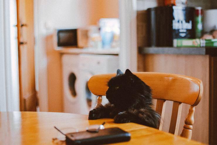Il felino non tollera il telefono