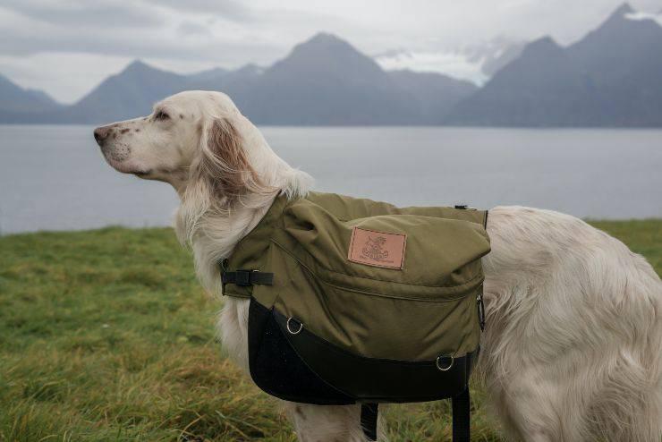 Razze di cani adatte al trekking