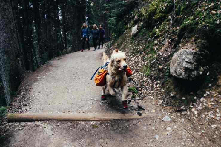 Razze canine perfette per il trekking