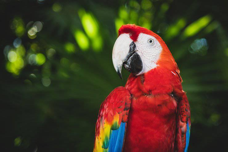 Educare il pappagallo a non beccare