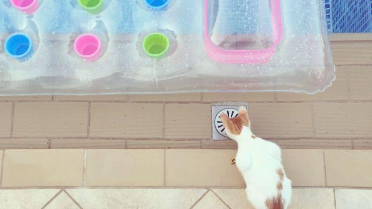 piscina gatti fai da te
