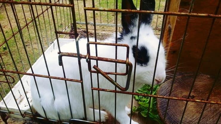 150 animali esotici salvati dal negozio degli errori (Foto Pixabay)