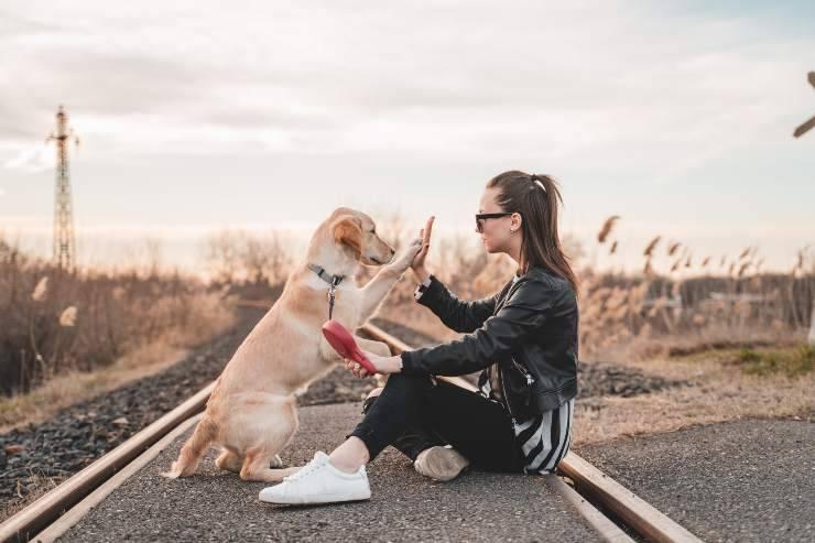 Razze di cani che rendono giovani