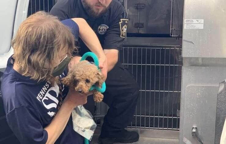 Uno dei 13 cani salvati dal canile illegale